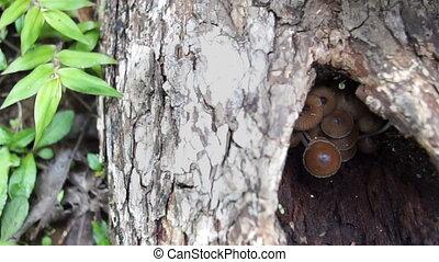 Mushrooms In Log Andes Rainforest