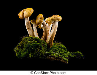 mushrooms in moss on a black background closeup