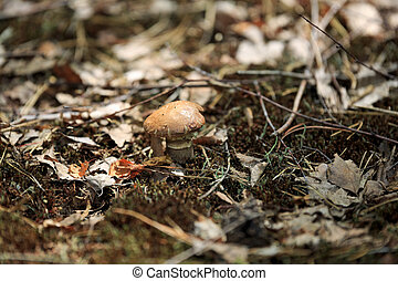Mushrooms in nature with shallow depth of field