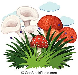Mushrooms in the bush on white background