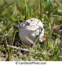 mushrooms in the grass outdoors