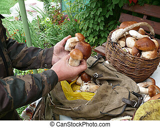 mushrooms in the hands and the basket