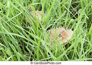 Mushrooms in the lawn