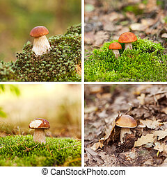Mushrooms in the moss