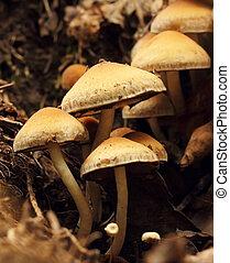 mushrooms macro