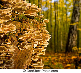 Mushrooms on a tree stump