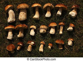 Mushrooms on grass. Seasonal harvest.