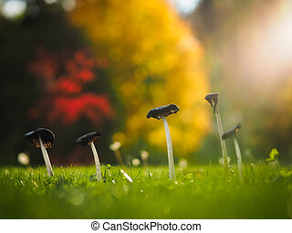 Mushrooms on lawn in autumn