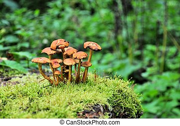 Mushrooms on moss in a forest