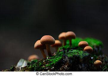 mushrooms on moss in autumn