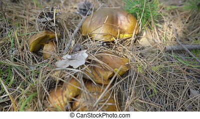 mushrooms on nature background