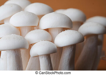 Mushrooms on the wood table raw materials for cooking