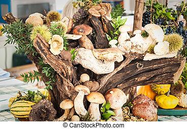 Mushrooms on trunk.
