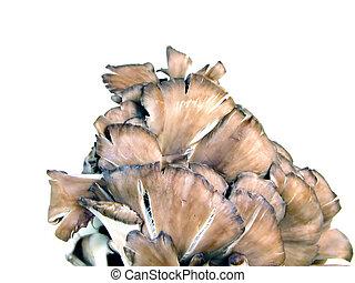 Mushrooms over white