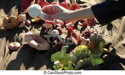 mushrooms plucked hands