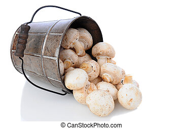Mushrooms Spilling from Bucket