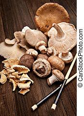 Mushrooms - Variety of various mushrooms shot on a natural ...
