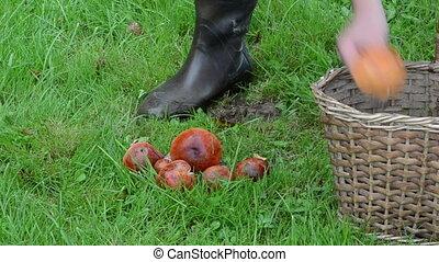 mushrooms wicker basket - wicker basket full of orange red...
