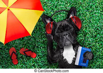 musik, hund, lyssnande