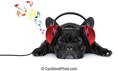 musik, hund
