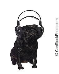 musique, carlin, noir, écoute
