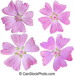 Musk-Mallow Set - Set of single head flower of Pink Malva...