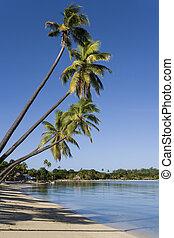 muskete, -, bucht, pazifik, fidschi, süden