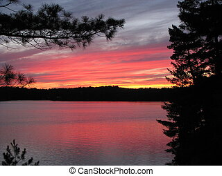 Muskoka Sunset - White Pine branch silhouetted by a sunset