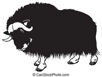 muskox black white