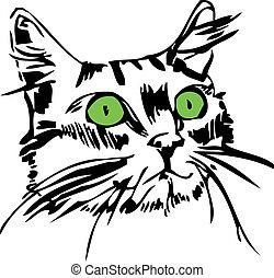 muso, occhi, gatto verde