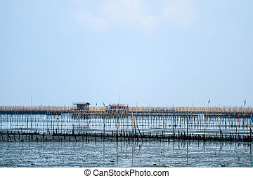 Mussel farm in sea along the mangrove forest