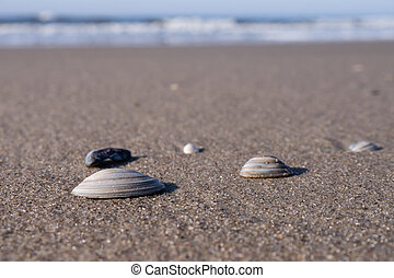 mussels at the beach