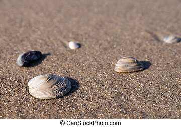 mussels on sand