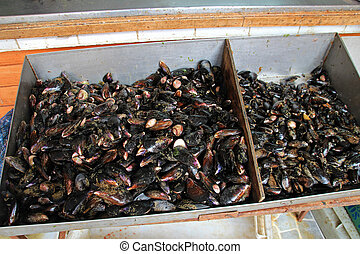 Mussels on the market in Ancud, Chiloe Island, Chile