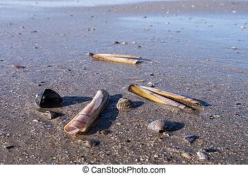 mussels still life