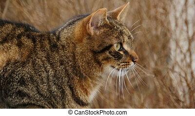 mustachioed striped cat close-up in profile close-up