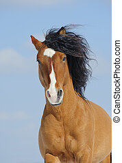 mustang, cavallo