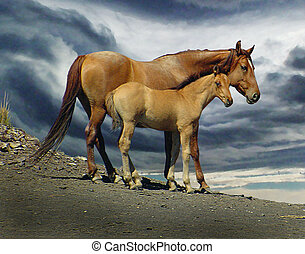 Spanish Mustang mare and colt