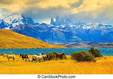Mustangs on the shore of Laguna Azul