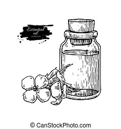 Mustard essential oil bottle and flower. Hand drawn vector illustration. Isolated drawing