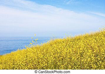 Mustard Field and Ocean
