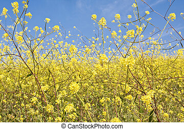 Mustard Flower Abstract - An abstracted view of wild mustard...