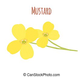 Mustard flower. Organic condiment. Cartoon flat style. Vector illustration