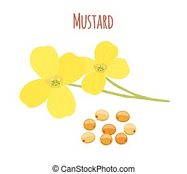 Mustard flower, seeds. Organic condiment. Cartoon flat style. Vector illustration