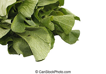 Mustard greens vegetable