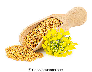 mustard seeds in wooden scoop