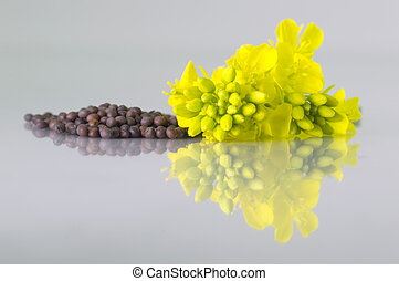 Brown Mustard seeds heap and mustard flower isolated on white background