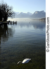 Mut swann on lake annecy landscape - Mut swann on lake...