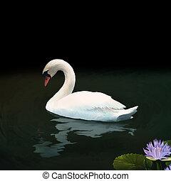 Mute Swan - digital painting of a white mute swan floating ...
