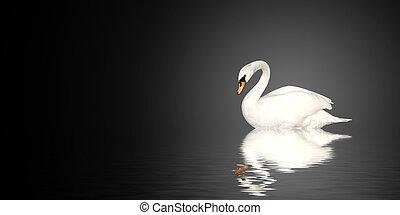 Mute swan on black background